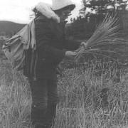 Druscilla Rich picking grass, Rigolet, 1978. Photo: Judy McGrath